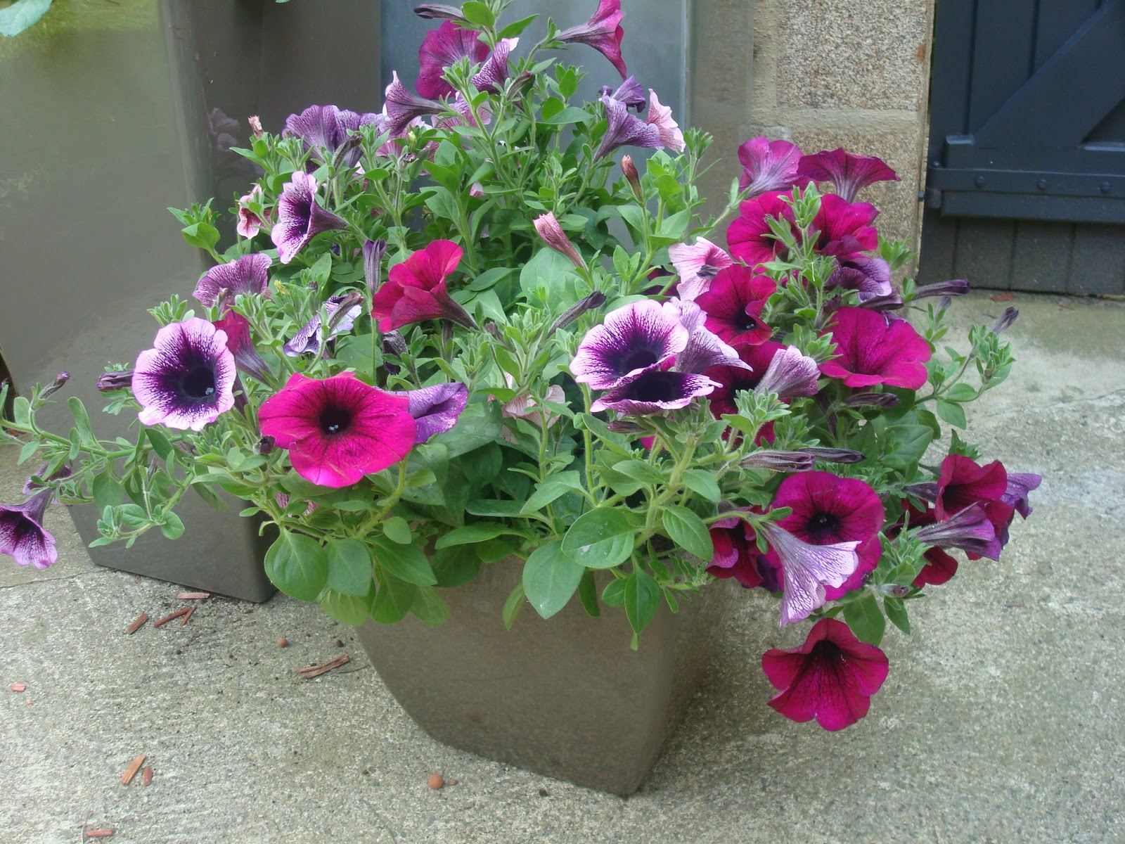 Fleurs qui fleurissent au mois de mai - Comment planter du muguet ...