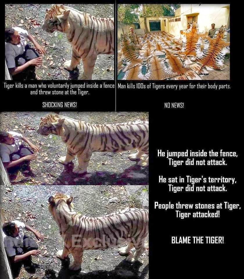 Tiger Attack's Man