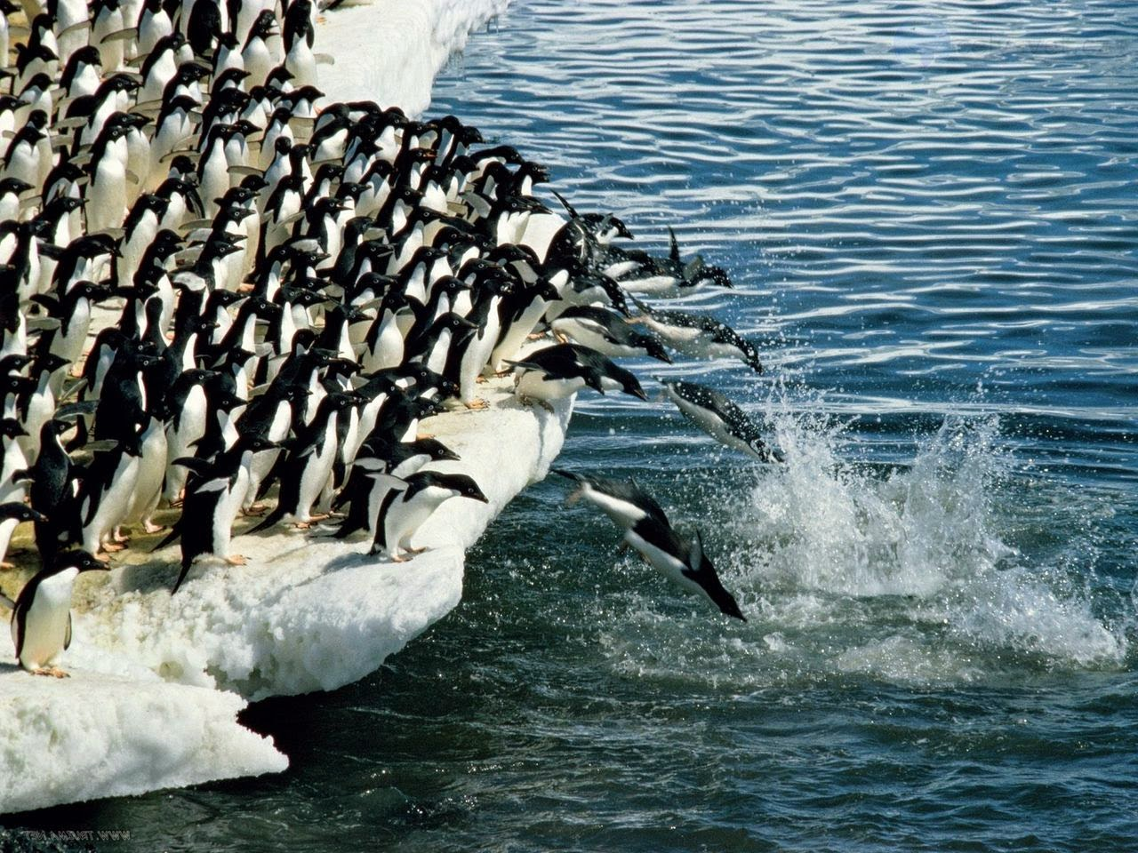 penguin.com essay contest This topic contains 0 replies, has 1 voice, and was last updated by schooladalempay 4 months ago viewing 1 post (of 1 total) author posts november 27, 2017 at 9:53 pm #1343 schooladalempayparticipant click here click here click here click here click here this amazing site, which includes experienced.