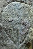 Paleolithic Female Triangle.