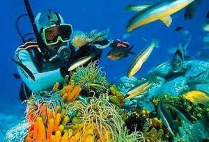 Tempat Menyelam/Diving di Bali