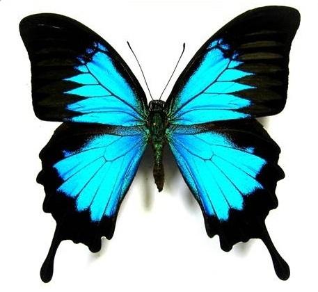 Decoraciones con mariposas - Mariposas decoracion pared ...
