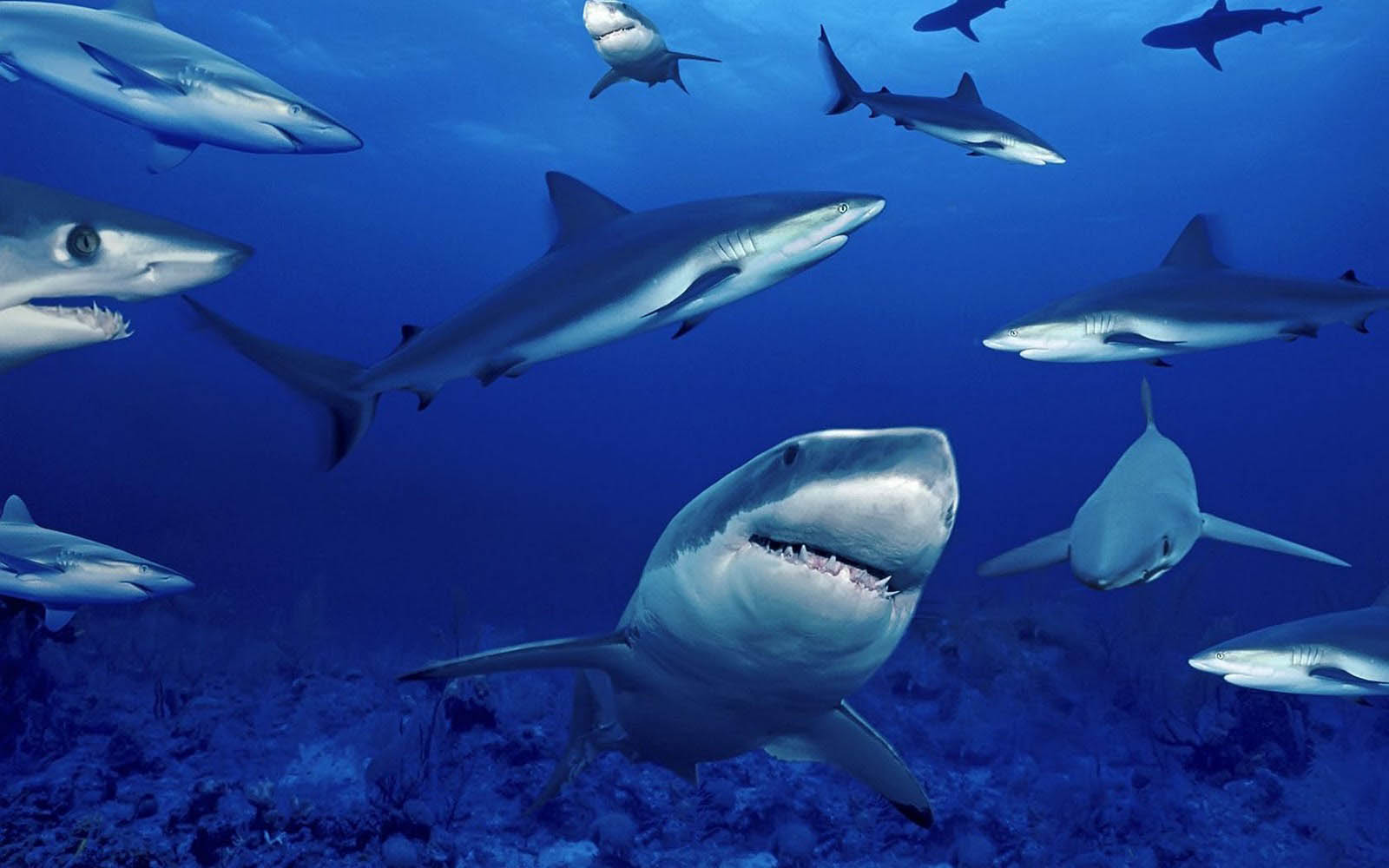Wallpapers sharks desktop wallpapers for And pictures