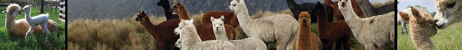 White Cloud Alpacas