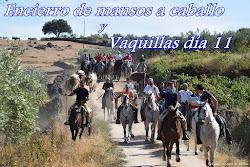 ENCIERRO DE MANSOS Y VAQUILLAS DÍA 11