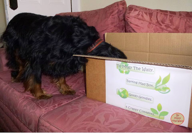 Molly The Wallys' Barking Mad Box 4!