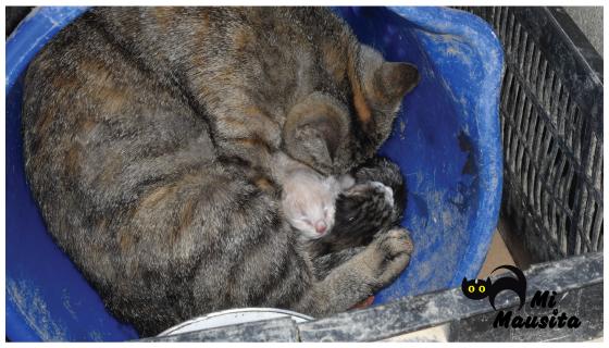 gatos, gatitos-recien-nacidos