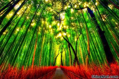 Bamboo Path, Japan