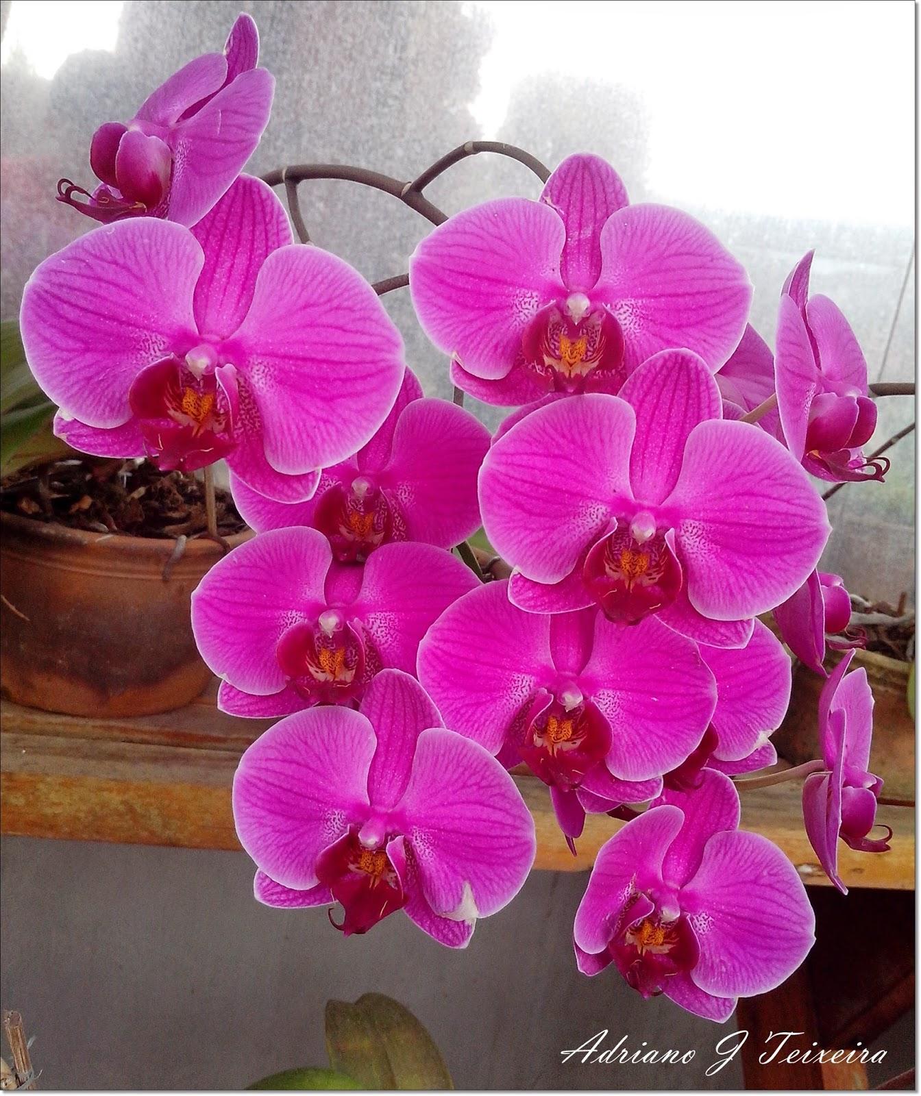 As 5 flores mais caras do mundo O Meu Jardim - Imagens De Flores Lindas Orquideas