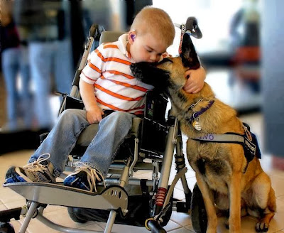 Picture That Shows the Eternal Love of Dog, dogs love