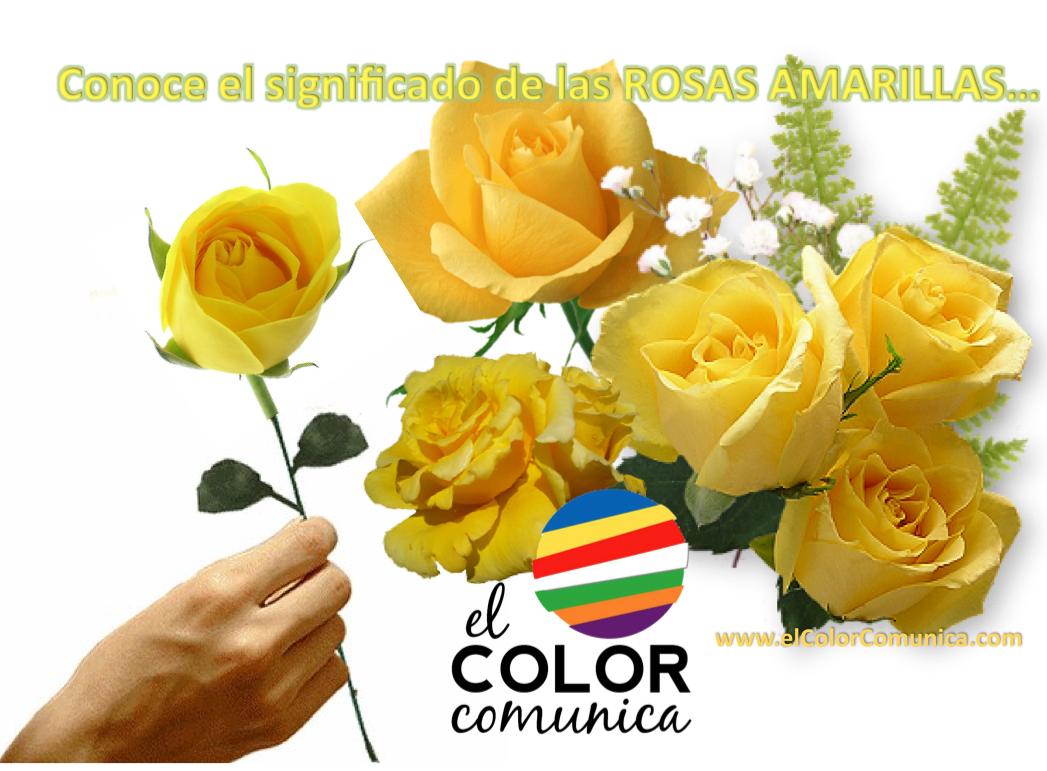 El color comunica significado de las rosas amarillas - Significado de los colores de las rosas ...