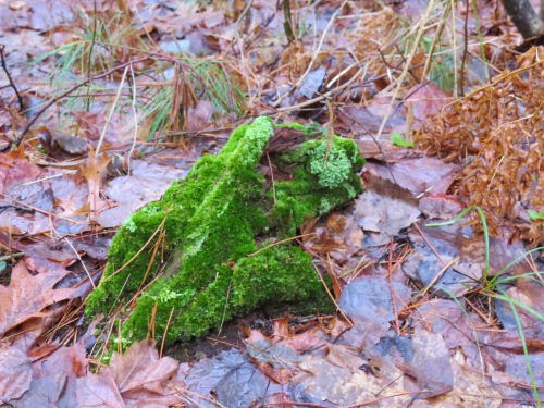 clump of green moss