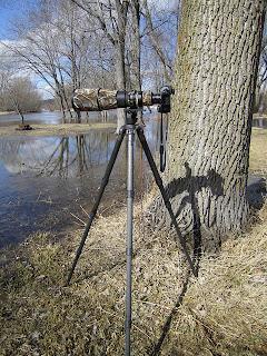 Nikon 500mm f/4 VR. Gitzo GT5541LS