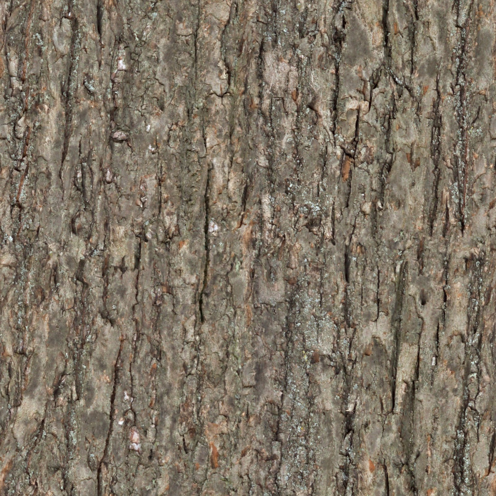 Wood tree bark seamless texture