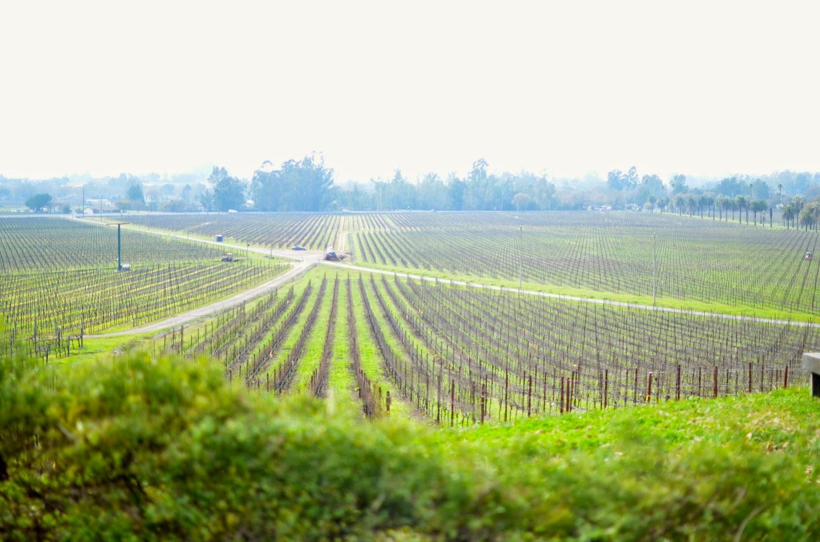 wine, scribe winery, napa, sonoma