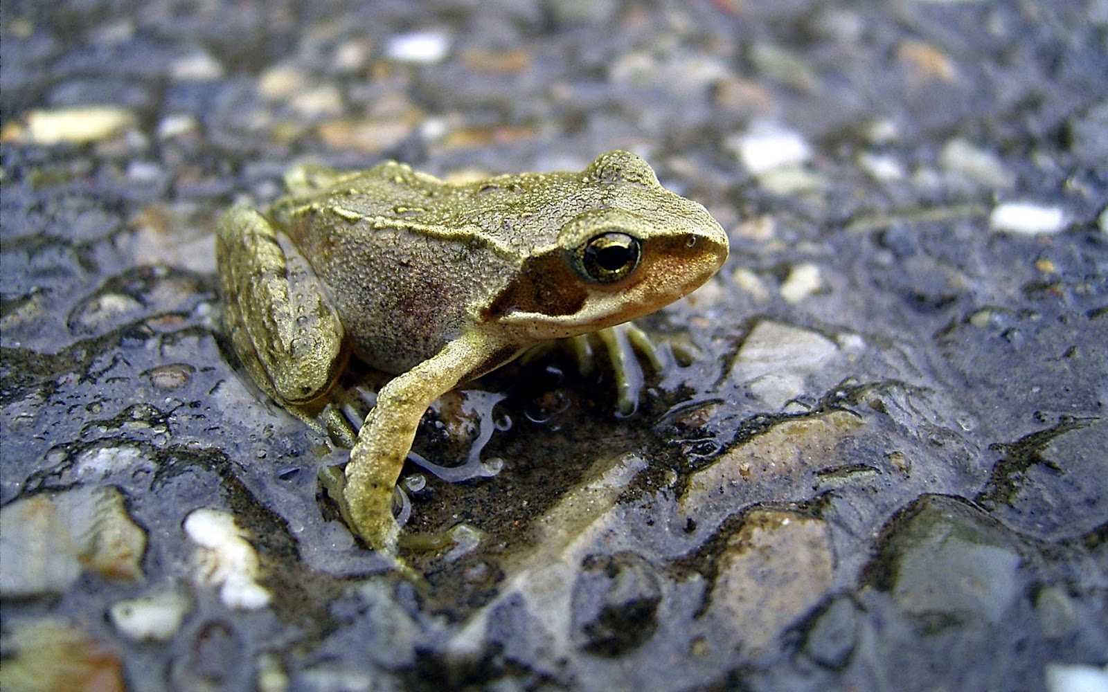 H D Reptiles Reptiles hd wal...