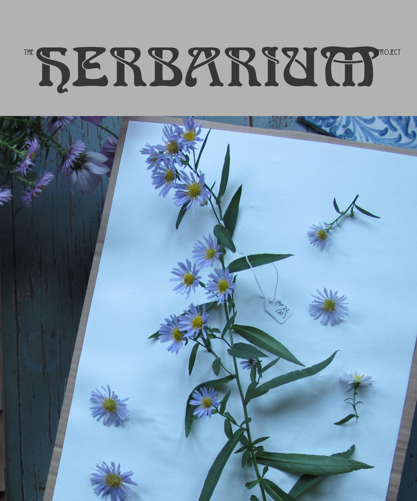 BACK TO THE HERBARIUM PROJECT