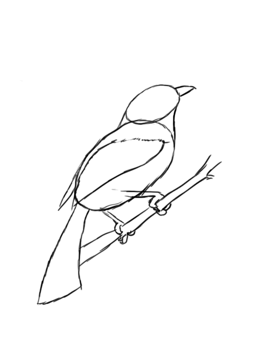 How To Draw A Bird Step By Step Draw Central