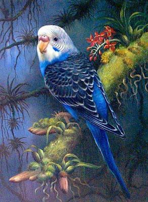 paisajes-aves