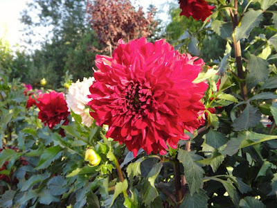 Beautiful Turkish flowers