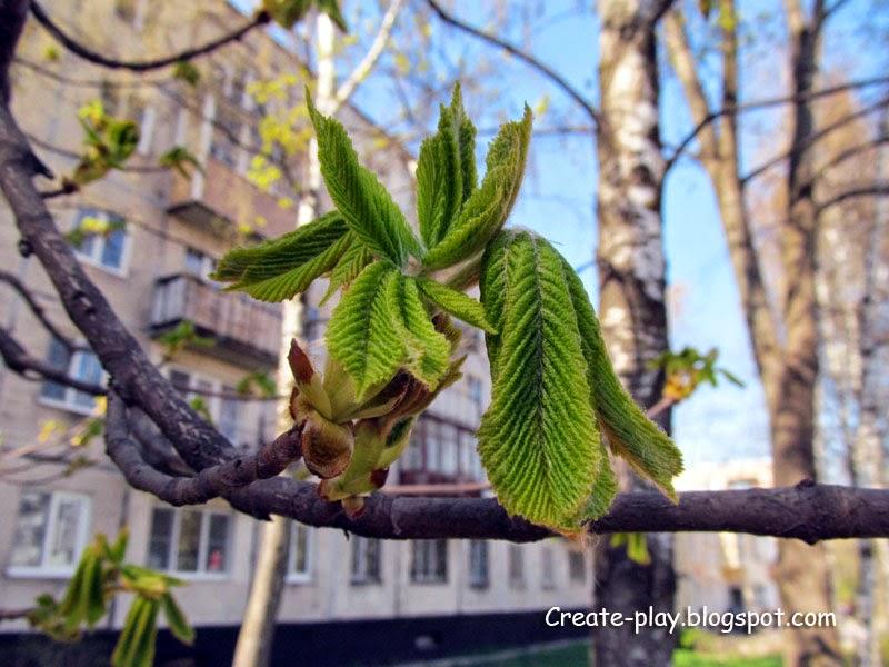 листья каштана весной