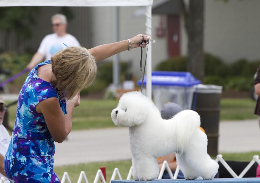 Kennel Club Of Niagara Falls Dog Show