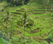Balinese irrigation system