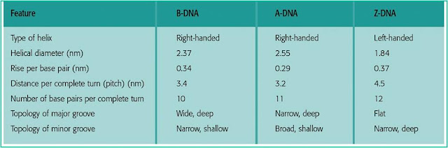Different forms of DNA