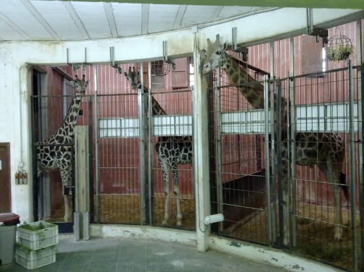fotos de animales del zoo - Animales del Zoológico Fotos flashcards Quizlet