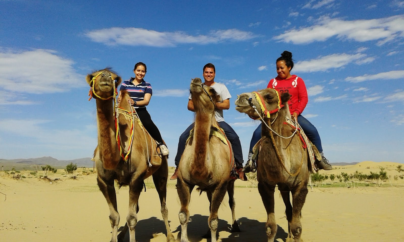 Camelos.