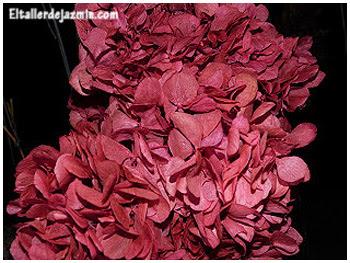 teñir hortensias - topiario