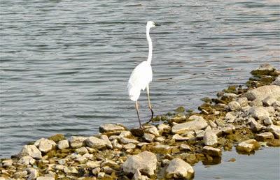 Bird inside water at Jal Mahal