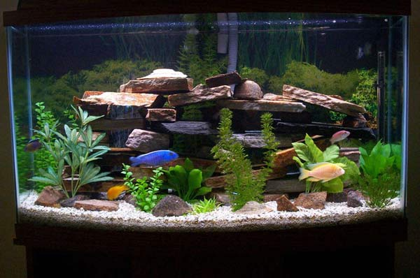fish tank the animal life fish for fish tanks 600x398