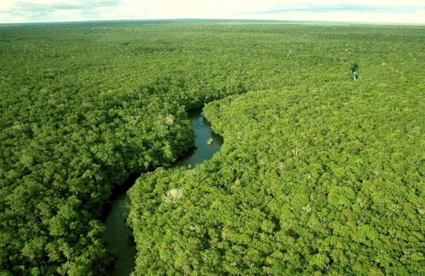 Amazing Photos Tour Look Up on the Amazon Forests