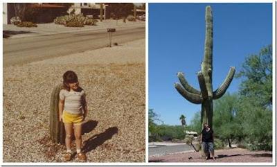 A menina e o cactus, o cactus e a mulher