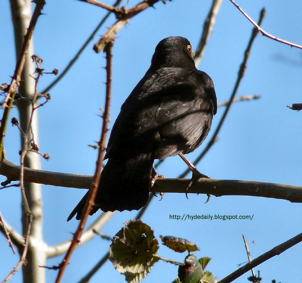 springblackbird asian pregnant woman with very