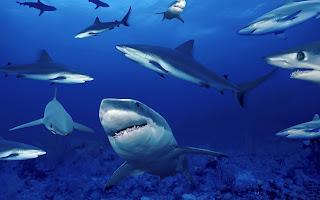 sharks underneath (22)