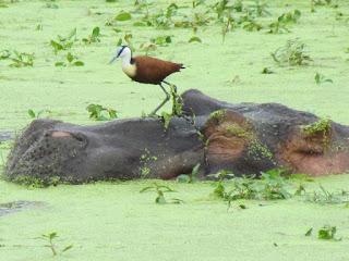 de rijkdom aan wildlife in het Krugerpark is enorm