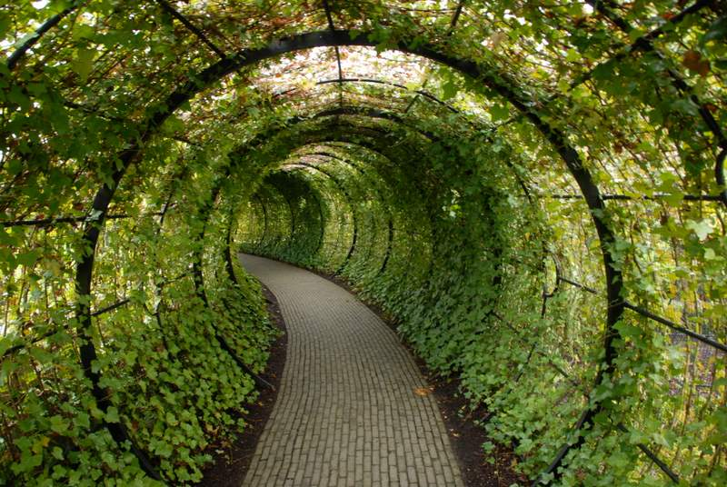 plantas toxicas jardim:Alnwick Poison Garden