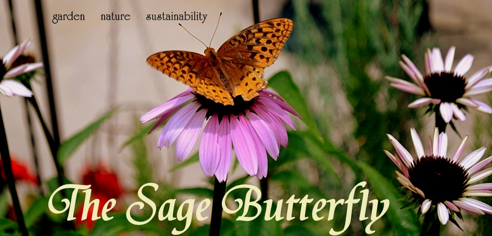 The Sage Butterfly