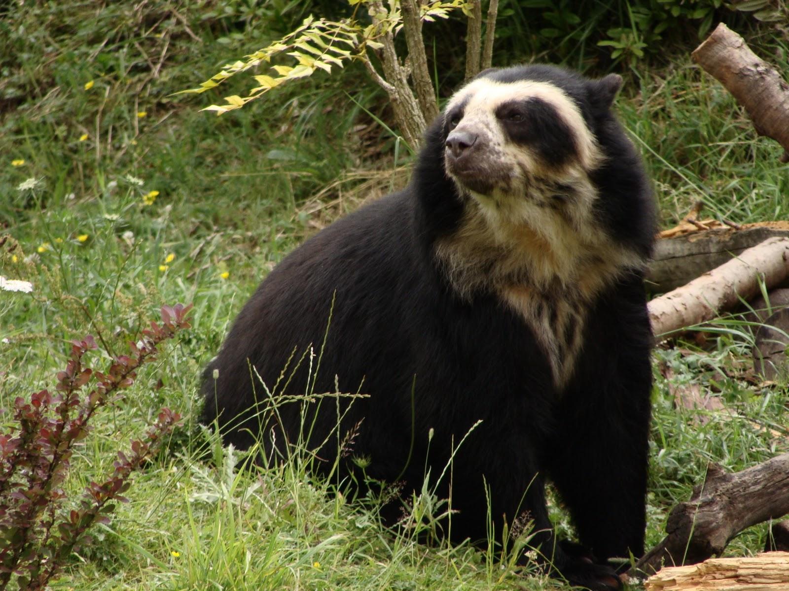 packer bear tickets polar bear holidays air bear polar bear diamonds ... Bear