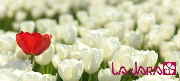 flores en valladolid