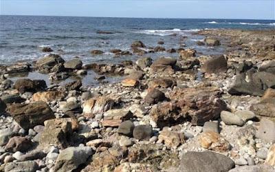 Απολιθωμένο Δάσος: Παγκόσμιο ενδιαφέρον για το νέο θαλάσσιο και χερσαίο πάρκο