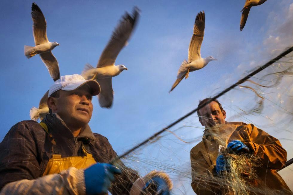pescadores y aves marinas