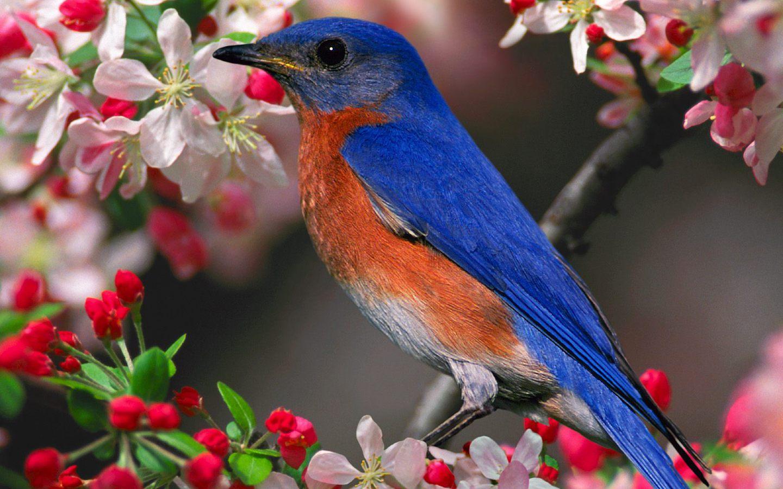 http://4.bp.blogspot.com/-zIRrTPJ3x-Q/Tm04UFXUhhI/AAAAAAAAAVc/fsuAbBTLgYo/s1600/bluebird-flower-wallpaper.jpg