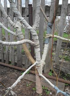 способ защиты яблонь от мышей  старыми колготками