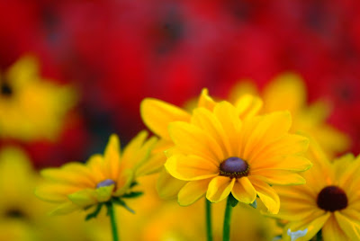 flower photography tips and techniques