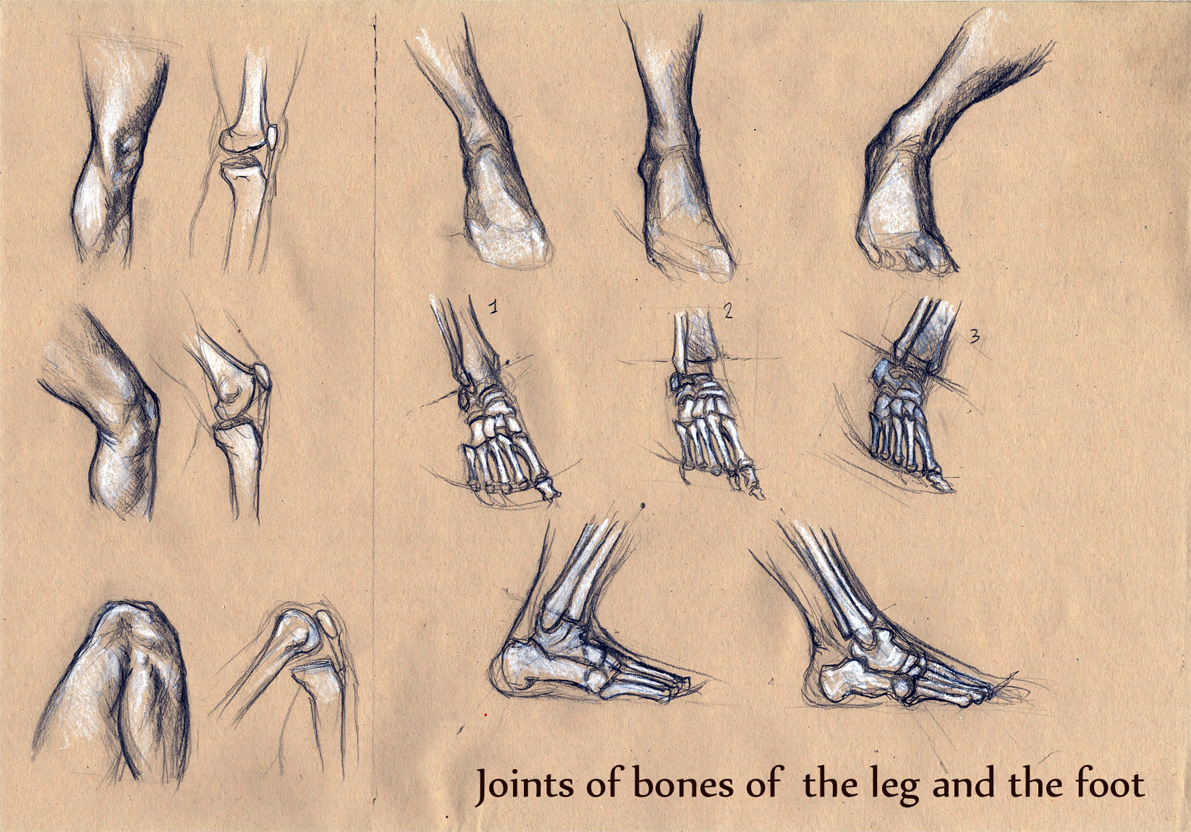 Michele Giorgi Illustrator Anatomy Sketches Joints Of The Bones