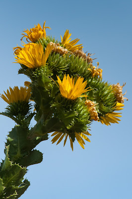 Pollinator Pocket Prairie, LLELA