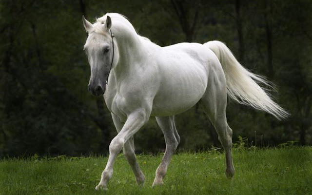 horses+pictures+%252810%2529